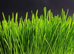 grass-534873_640