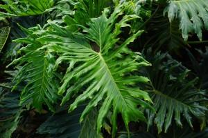 leaves-375610_640