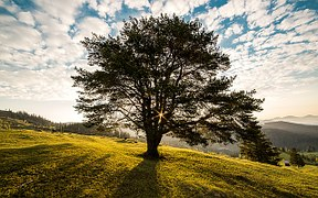 tree-338211__180
