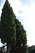 tree-652039__180