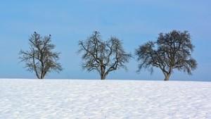 winter-1153699__180